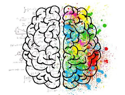 cerveau 7 dimensions de l'intelligence